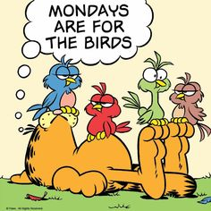 Mondays and Garfield. Garfield Quotes, Garfield Cartoon, Garfield And Odie, Garfield Comics, Cartoon Pics, Cartoon Characters, Garfield Wallpaper, Garfield Pictures, Monday Humor
