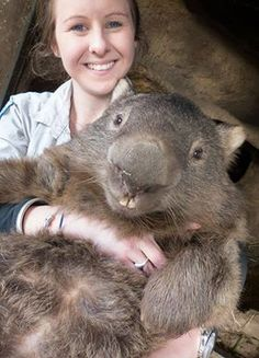 largest wombat in the world 'Patrick'.......Tumblr