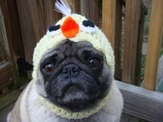 Or maybe he's more of a chick magnet?