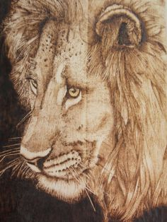LION...Pyrography on plywood.