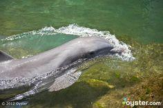 Dolphin Lagoon at The Kahala Hotel and Resort