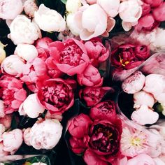 our valentine's day blooms: peonies.