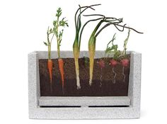 Root Vue Farm. Self-watering grow unit with a special viewing window to watch and learn how roots from carrots, radishes, and onions develop underground. This complete garden lab comes with everything you need.