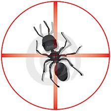 Pest Control Websites