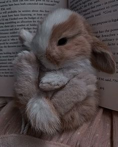 Cute Kawaii Animals, Baby Animals Super Cute, Cute Wild Animals, Cute Little Animals, Cute Funny Animals, Animals Beautiful, Cute Cats, Baby Farm Animals, Cute Bunny Pictures