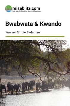 Der Bwabwata-Nationalpark ist Heimat riesiger Elefantenherden. Und auch sonst gibt es dort zahlreiche Tiere. Ein tolles Erlebnis zu Land und zu Wasser! Movies, Movie Posters, Travel, Round Trip, Travel Report, National Forest, Africa, Viajes, Animales