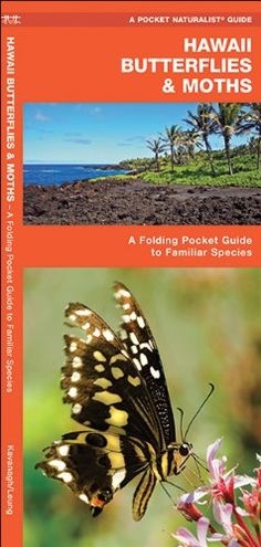 Hawaii Butterflies & Moths: A Folding Pocket Guide to Fam...