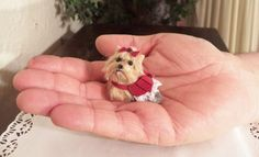 miniature Yorkie with dress, sculpted and furred dollhouse size