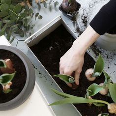 Find your springtime vibe and get some greenery in your home. Our many different pots and Plant Boxes are perfect for dressing up your home in spring green. View more - ferm LIVING Instagram (@fermliving)
