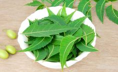 indian curry leaf