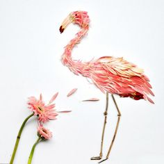 Malaysian artist / architect Red Hong Yi presented their new works. All exotic birds made of petals and leaves, mainly of gerbera flowers. Birds of the petals Art Floral, Flower Bird, Flower Petals, Flamingo Art, Flamingo Flower, Pink Flamingos, Pressed Flower Art, Bird Illustration, Flower Illustrations
