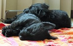 My kind of double-trouble:   awwh Ruby & Bella, you were such wild & crazy puppies!   As I recall, your favorite activity that summer was ripping up ALL the cushions on the patio furniture-- the good-old-days...