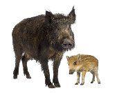Kids For Animals - Dieren Entrees, Cow, Grand Veneur, Animals, Menu, Baking, Kids, Animales, Bakken