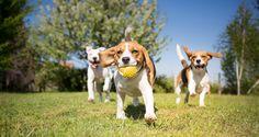 Nämä kolme sovellusta auttavat koiranomistajia löytämään ulkoilupaikkavinkkejä, koiraseuraa tai hoitajia sekä välttämään mahdolliset vaaranpaikat.