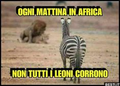 Ogni mattina in Africa Funny Times, Charles Bukowski, Cool Photos, Amazing Photos, Funny Pictures, Funny Quotes, Africa, Jokes, Comics