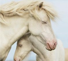 Gorgeous, reminds me of the horse named Cloud.