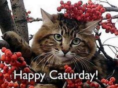 Bildresultat för good caturday