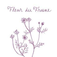 fleur_thumb4.png