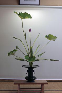 lotus rikka - rather basic