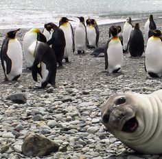 Cutest photo bomb ever.