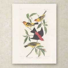 Louisiana Tanager by John James Audubon Painting Print on Wrapped Canvas