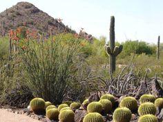 az desert botanical gardens | Desert Botanical Garden | GardenVisit.com, the garden landscape guide