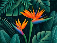 Bird of Paradise Flowers by Krestovskaya Anna This flowers inspired me to draw this illustration. Bird Of Paradise Yoga, Birds Of Paradise Plant, Birds Of Paradise Flower, Bird Of Paradise Tattoo, Paradise Garden, Tropical Birds, Tropical Art, Tropical Leaves, Tropical Flowers
