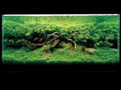 Aquatic design by the amazing Takashi Amano