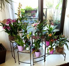 Orchideen, Orchideentreppe, Orchideensammlung