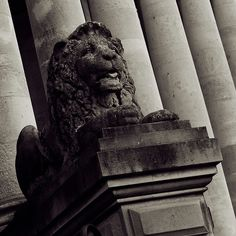 Quadtone square image of one of the stone lions guarding the entrance to Portsmouth Guildhall.