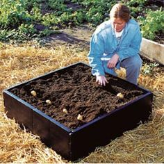 Patio potato planter: A great container designed to grow spuds on your patio
