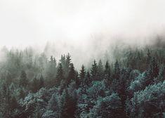 Poster mit Fotografie, Natur und Wald | Plakat | Desenio