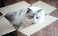 Download wallpapers white gray cat, cardboard box, cute animals, pets, fluffy cat