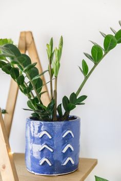 Indoor House plants guide - beginner plants you can't kill 3