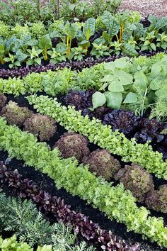 11 plant combos you should grow side-by-sidee - Companion Planting