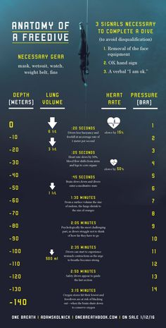 Anatomy of a Freedive