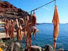 While the waves hit the shores and the seagulls fly...the octopus are hanging high in the sky order to dry... #octopus #sky #high #dry #greece #travel #islandlife #greekislands #sailing