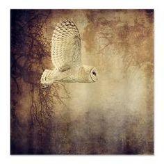 Barn Owl Shower Curtain> Barn Owl> Heather Green Photography