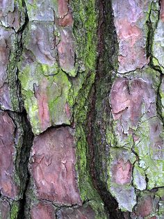 tree bark and moss