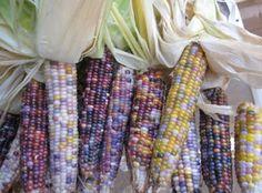 Biodiversità da riscoprire: 10 ortaggi colorati, frutto di madre natura