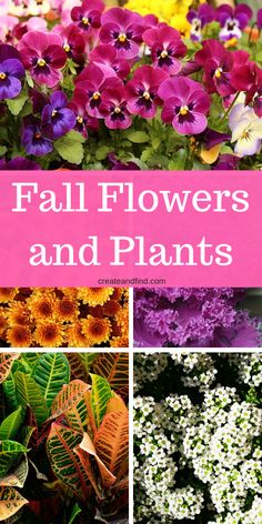 Colorful plants for fall - flowers and plants for cooler temps #createandfind #fallplants #flowerstoplantinfall #fall #plantinginfall