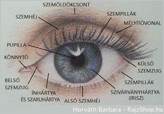két szem más látás)