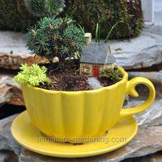 Miniature Gardening - Grandma's Cobblestone Micro Cottage
