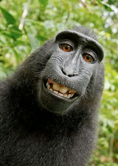 Monkey self portrait. For real! So funny!