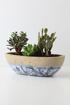 stylish pots & planters