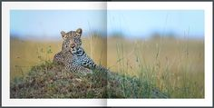 As Long As There Are Animals | David Lloyd Wildlife Photography