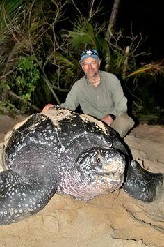 Carl Safina's Blog Turtle Love, Jungle Animals, Baby Animals, Cute Animals, Underwater Creatures, Ocean Creatures, Land Turtles, Sea Turtles, Turtles