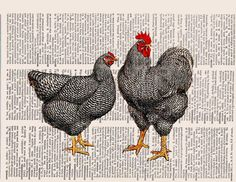Black speckled country French chickens printed on old dictionary book page