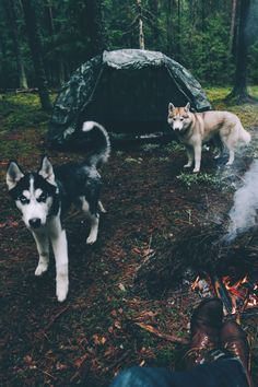 Camping in the wilderness with two gorgeous huskies. . .living the dream!