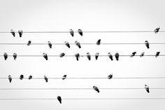 Musical Birds